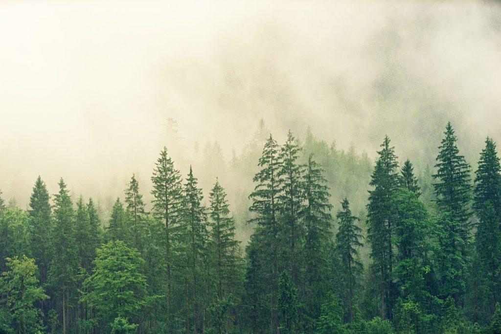 fog-3622519_1920